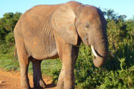 Beautifull Elephant