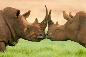 eastern-cape-safari-3-days-rhino